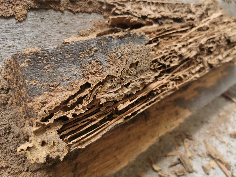 Medium close-up of wood chunk that has been damaged by termite consumption.